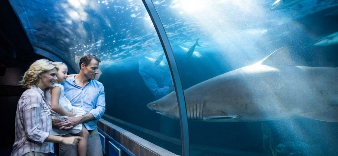 hello_weekend_family_at_two_oceans_aquarium_looking_at_shark_istock